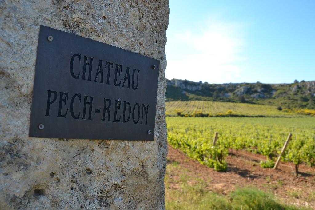 Château Pech Redon : Cepages Wines